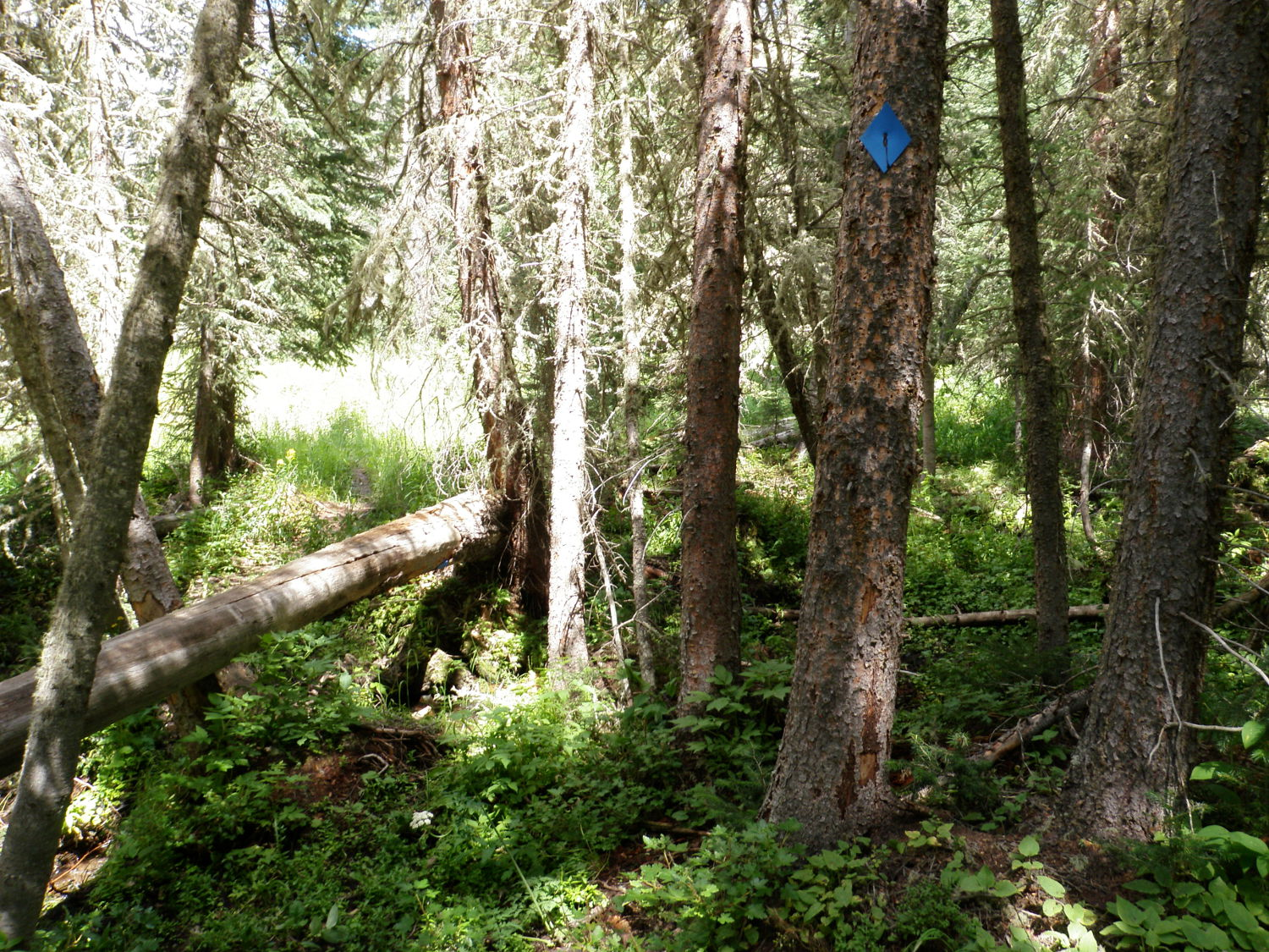 Yurt Trail Markers